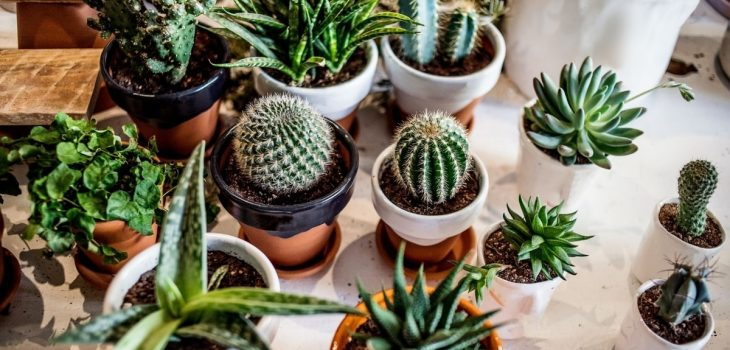 Do Succulents Need To Drain - What You Should Know