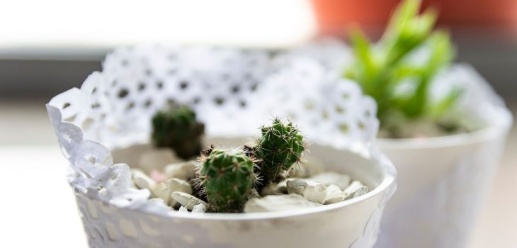 How Long Do Succulents Take To Grow From Seeds