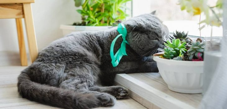 Are Succulents Bad For Cats Here's the Truth