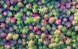 How To Grow Sedum From Seed Step By Step Guide