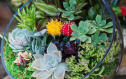 How To Make Your Own Terrarium With Succulent Plants