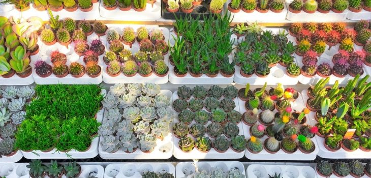 Ordering Succulents In Bulk For Business
