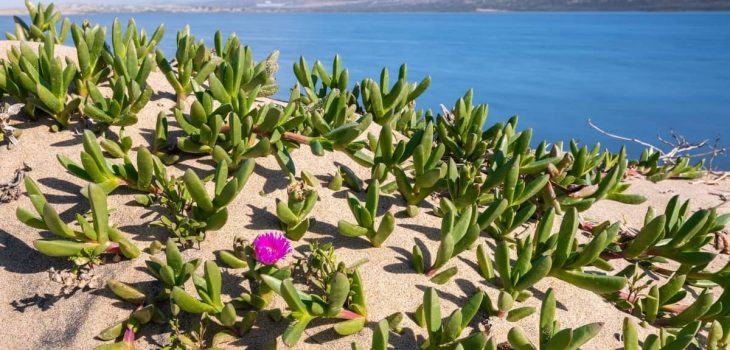 Top Tips On Where To Buy Sand For Plants