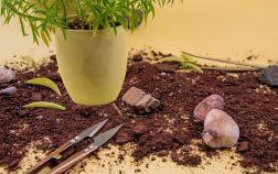 Expert Tips On How To Trim A Succulent