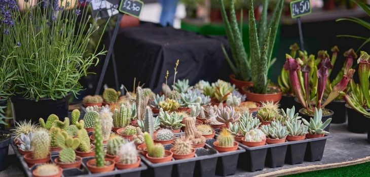 Selling Succulents At Farmers Market