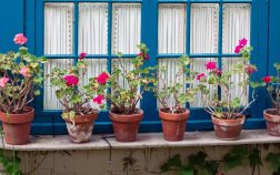 Top Outdoor Potted Plants That Don't Need Much Water