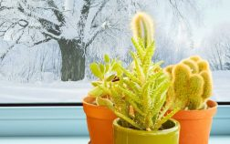 When To Bring Succulents Inside