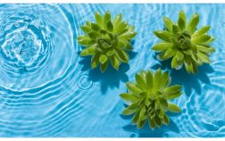 Can Succulents Grow In Water