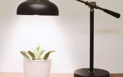 How Close Should Grow Lights Be To Plants