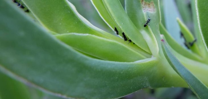 How To Drive Ants Out Potted Plants
