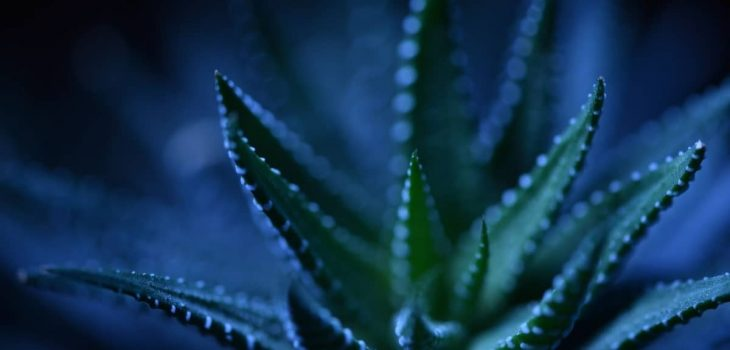 What Are The Succulents That Don't Need Light